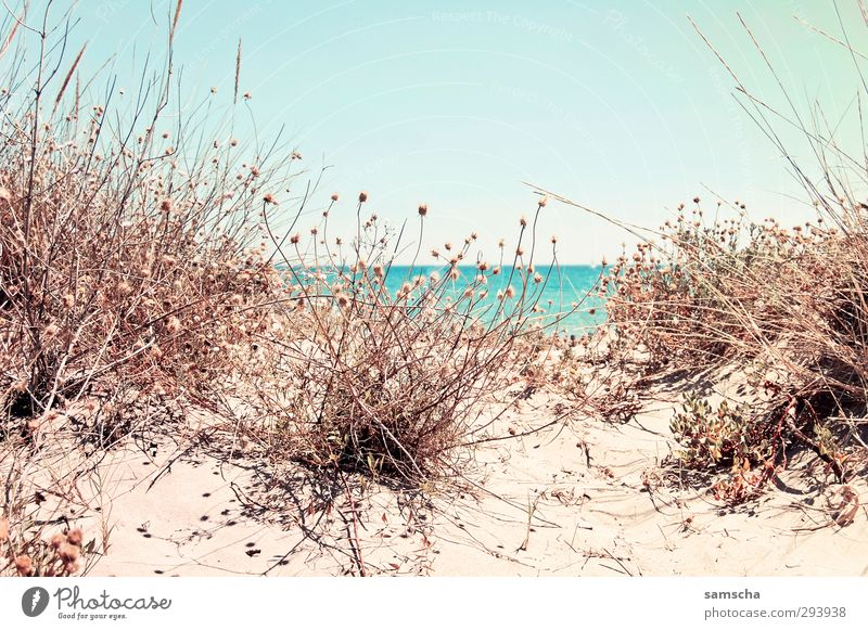 Hinter der Düne Himmel Natur blau Ferien & Urlaub & Reisen Wasser schön Pflanze Meer Landschaft Strand Erholung Umwelt Wärme Freiheit Küste Sand