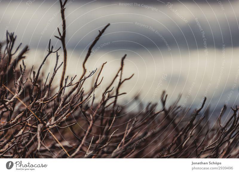 kahle Sträucher in den Highlands, Schottland Umwelt Natur Klimawandel schlechtes Wetter Angst bizarr Endzeitstimmung Enttäuschung Pflanze Ast Dürre verdorrt