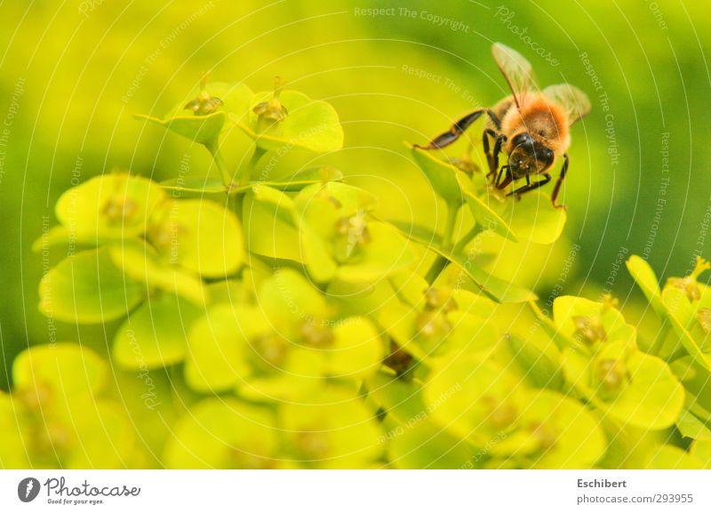 Leckereien soweit das Auge blickt! Natur Pflanze grün Sommer Erholung Blume Landschaft Tier gelb Wärme Blüte Gesundheit Garten fliegen Arbeit & Erwerbstätigkeit