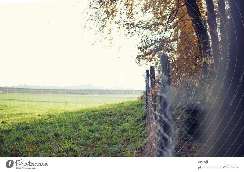 da vorn! Natur grün Sommer Landschaft Umwelt Frühling natürlich Feld Schönes Wetter Zaun