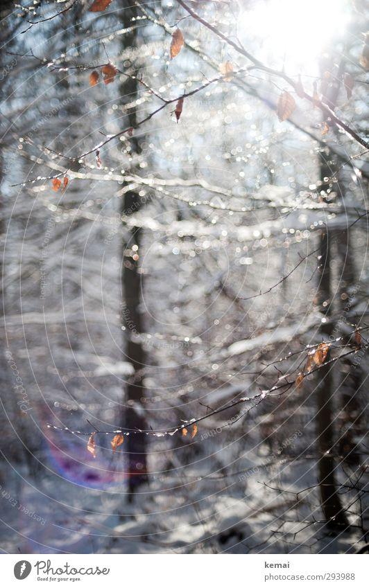 Die Tage werden anders sein Umwelt Natur Landschaft Pflanze Wassertropfen Sonnenlicht Winter Schönes Wetter Eis Frost Schnee Baum Sträucher Blatt Ast Zweig Wald
