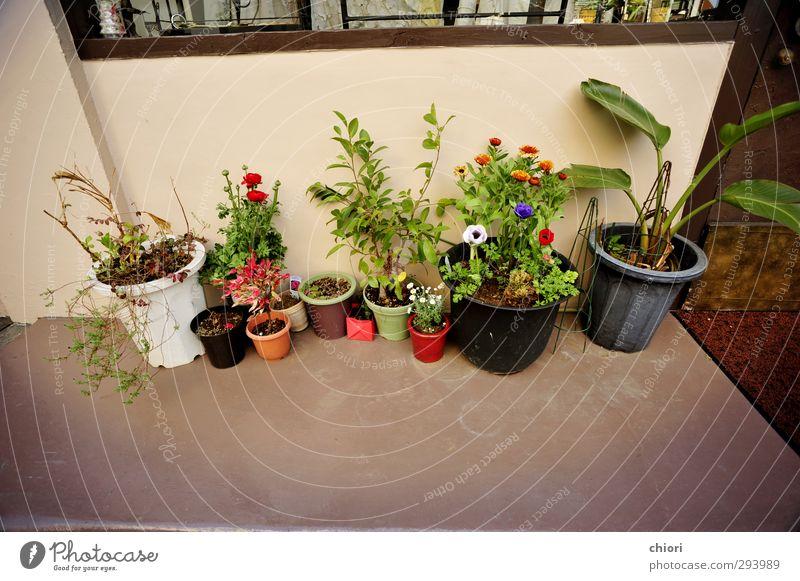 grün Pflanze Freude Landschaft ruhig Garten glänzend Design Tourismus Ausflug Show Sightseeing Mitgefühl Topfpflanze Güte Städtereise