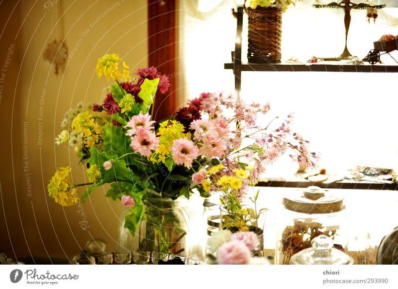 Warmes Sonnenlicht Lifestyle ruhig Ausflug Freiheit Haus Traumhaus Innenarchitektur Möbel Kunst Kunstwerk Pflanze Garten Blühend Duft ästhetisch Freundlichkeit