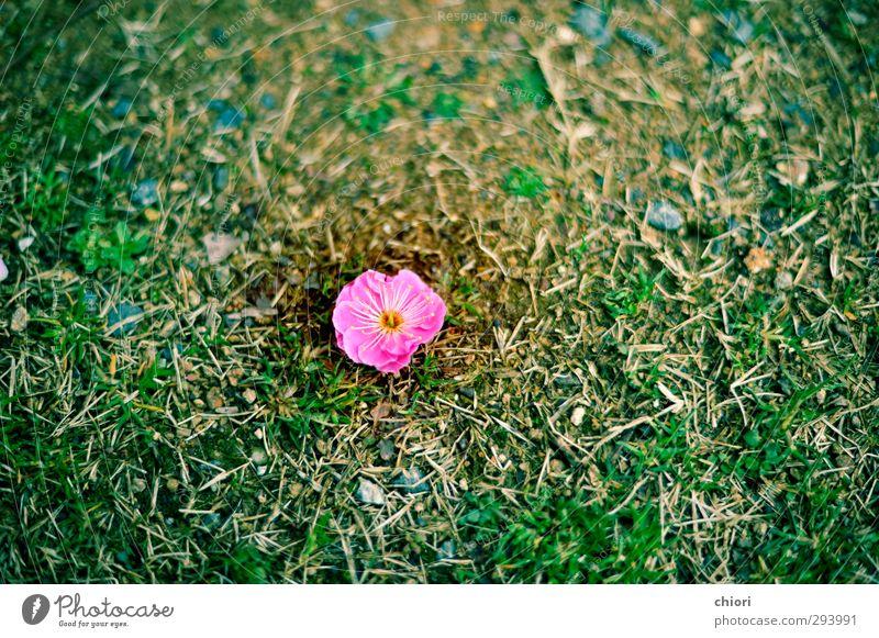 Natur grün schön Pflanze Wald Umwelt Liebe Frühling Glück Blüte Garten rosa Kraft Lifestyle frei Fröhlichkeit