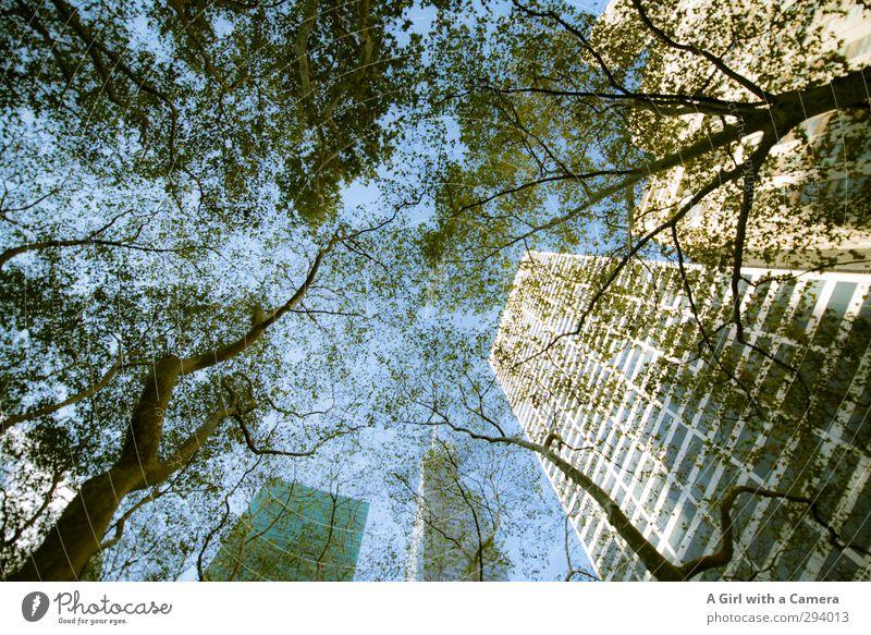 but above all Natur Himmel Wolkenloser Himmel Herbst Schönes Wetter Baum New York City Stadt Stadtzentrum Skyline Hochhaus Bauwerk Architektur Mauer Wand hoch