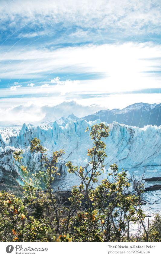 Perito Moreno Gletscher Natur Landschaft blau türkis weiß Argentinien Baum Sträucher Eisberg Wolken Stimmung Wasser Tourismus Patagonien Farbfoto Außenaufnahme