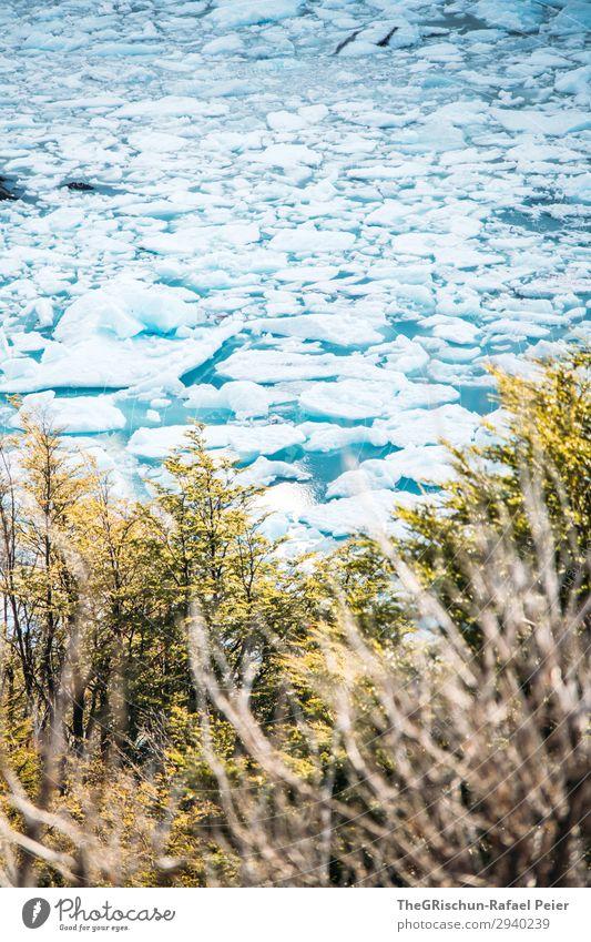 Eisschollen Natur Landschaft blau türkis weiß Wasser Gletscher Im Wasser treiben kalt Perito Moreno Gletscher Baum Sträucher brechen Farbfoto Außenaufnahme