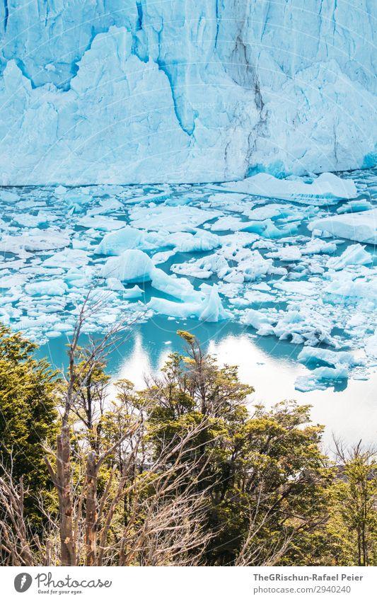 Perito Moreno Gletscher Natur blau türkis weiß Wasser Reflexion & Spiegelung Baum See Eisscholle Im Wasser treiben Riss brechen beeindruckend Argentinien