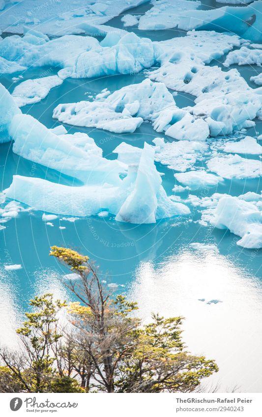 Eisschollen Natur blau türkis weiß See Baum Schnee Perito Moreno Gletscher Reisefotografie Ferien & Urlaub & Reisen entdecken Argentinien Farbfoto Außenaufnahme