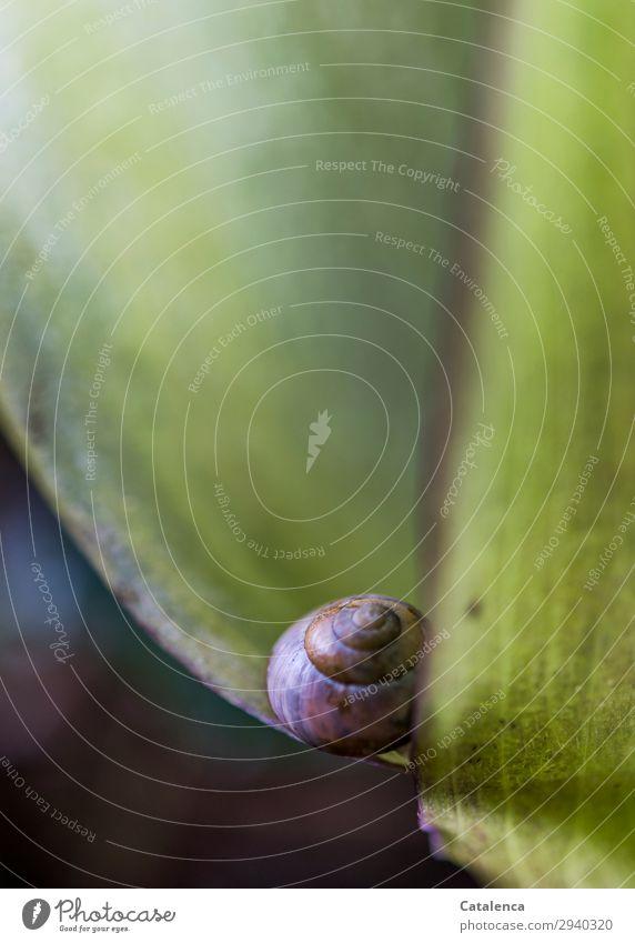 Auf der Kante Natur Pflanze Tier Frühling Blatt Blüte Aronstab Garten Wald Schnecke 1 Blühend schön klein braun grün violett Stimmung achtsam Zukunft