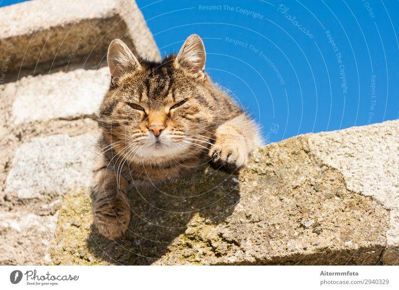 Schöne Katze schön Gesicht Freundschaft Natur Tier Himmel Wolken Felsen Pelzmantel Haustier Stein schlafen sitzen stehen lustig Neugier niedlich blau grau weiß