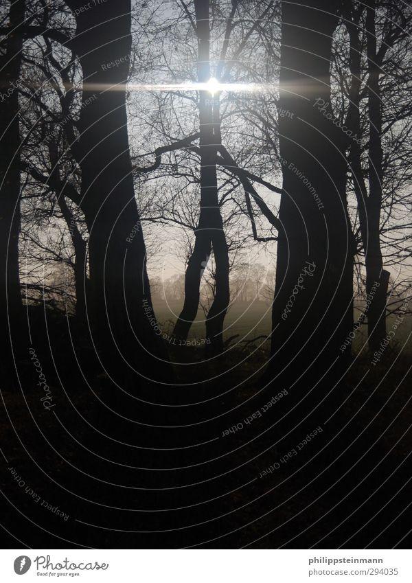 MoonWalk Natur Landschaft Pflanze Nachthimmel Winter Nebel Baum Feld Wald dunkel gruselig schwarz Mondschein Außenaufnahme Textfreiraum unten Lichterscheinung