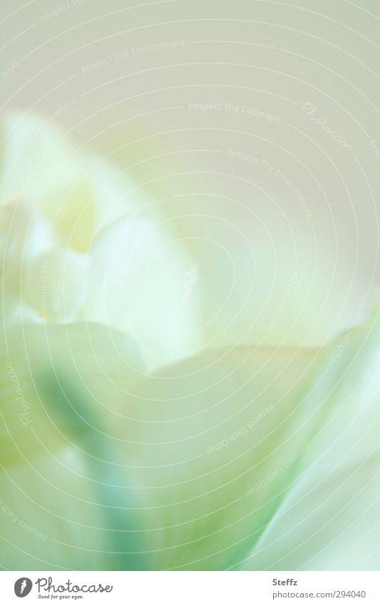 hauchzarte Tulpenblüte Frühlingsblume blühende Tulpe abstrakt hellgrün Pastellfarben poetisch Romantik Sinn Pastellton Pastelltöne lichtvoll malerisch