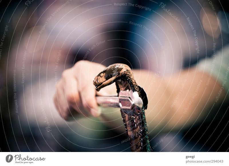 Aberglauben Hand Tier Tod Griff Schlange Zange Volksglaube haltend Kobra Potenz aphrodisierend