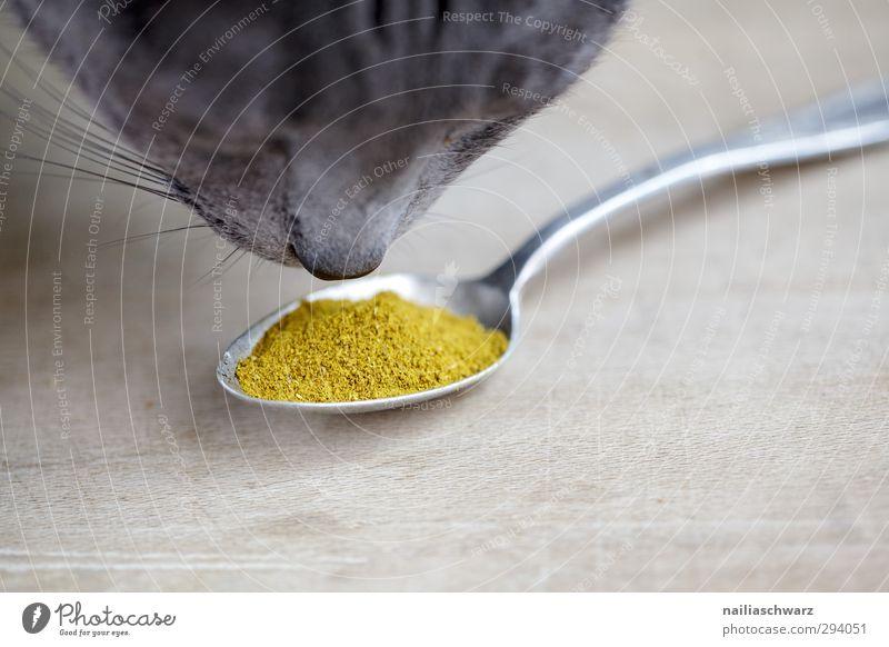 lecker! Katze blau schön Tier gelb grau natürlich Lebensmittel niedlich genießen Neugier Kräuter & Gewürze Haustier Duft positiv