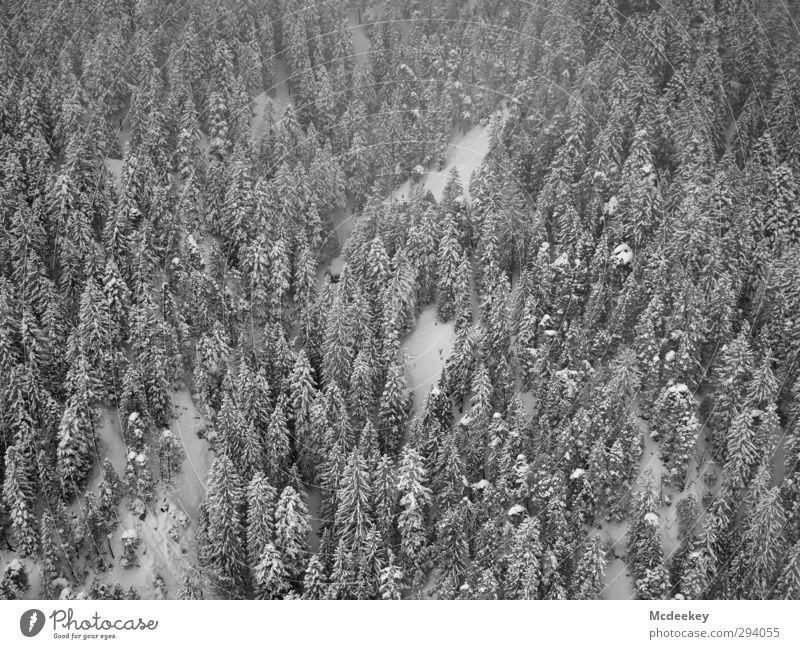 Über den Bäumen, ai ai ai ja :) Natur weiß Pflanze Baum Landschaft Winter schwarz Wald dunkel Berge u. Gebirge kalt Schnee grau Schneefall Nebel mehrere
