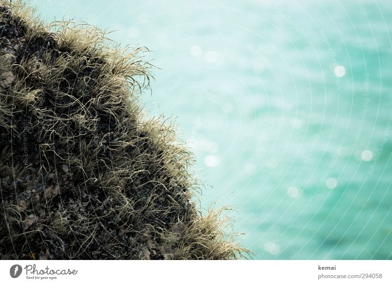 Am Meer Umwelt Natur Pflanze Sonnenlicht Sommer Schönes Wetter Gras Moos Wildpflanze Cornwall dehydrieren Wachstum türkis Küste Farbfoto Gedeckte Farben