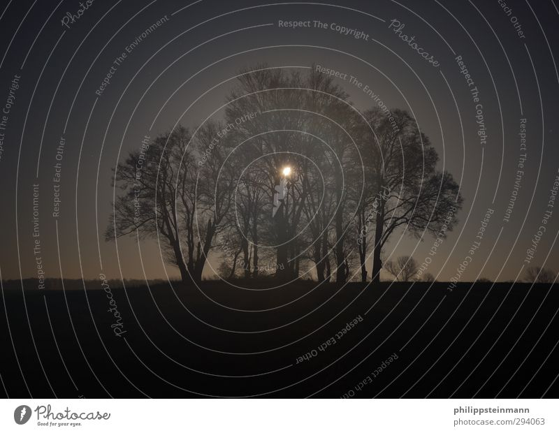 Mondwald Natur blau Ferien & Urlaub & Reisen Baum Einsamkeit Landschaft ruhig schwarz dunkel Herbst Feld Angst Nebel wandern Abenteuer gruselig