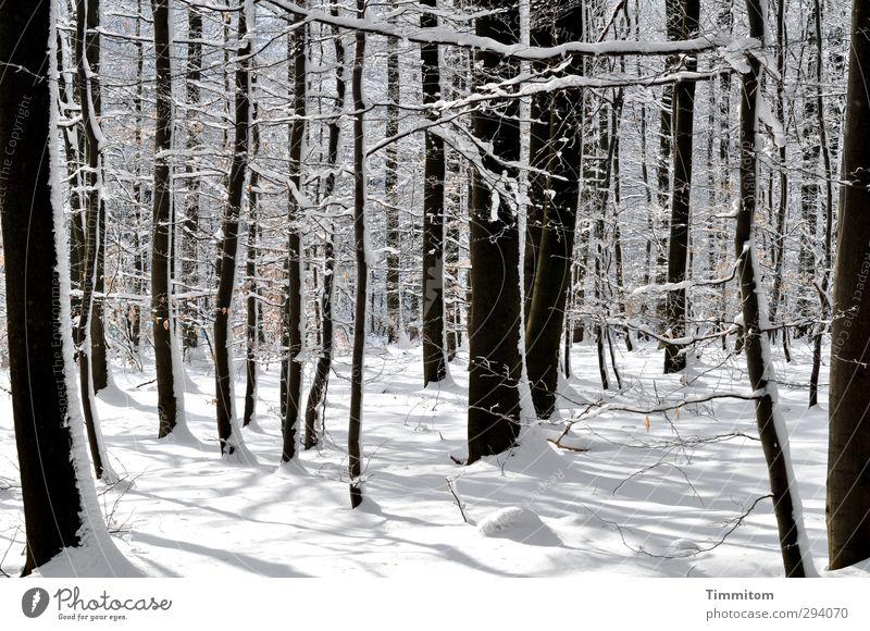 Schatten | Neulich erst. Winter Schnee Umwelt Natur Pflanze Schönes Wetter Baum Wald Holz stehen ästhetisch kalt natürlich schön weiß Lebensfreude Erholung hell