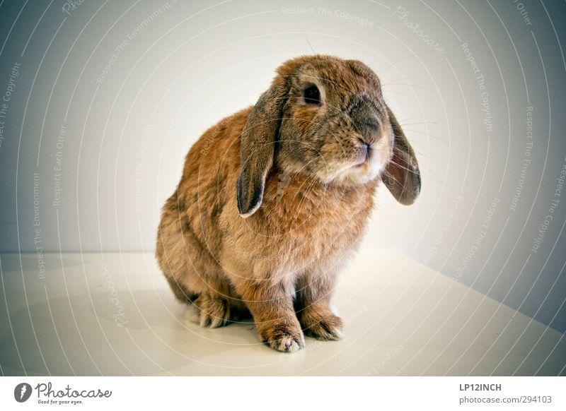 Health Care Management. schön Tier Essen Feste & Feiern Freundschaft wild warten niedlich weich Kultur Freundlichkeit Fell Haustier Hase & Kaninchen Fleisch