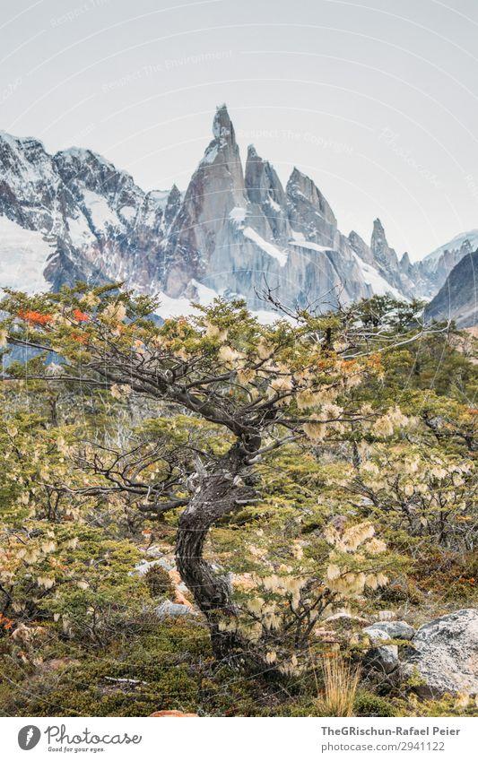 Cerro Torre Natur braun grau grün weiß Baum Bergkette Berge u. Gebirge Aussicht Argentinien Patagonien wandern entdecken Farbfoto Außenaufnahme Menschenleer