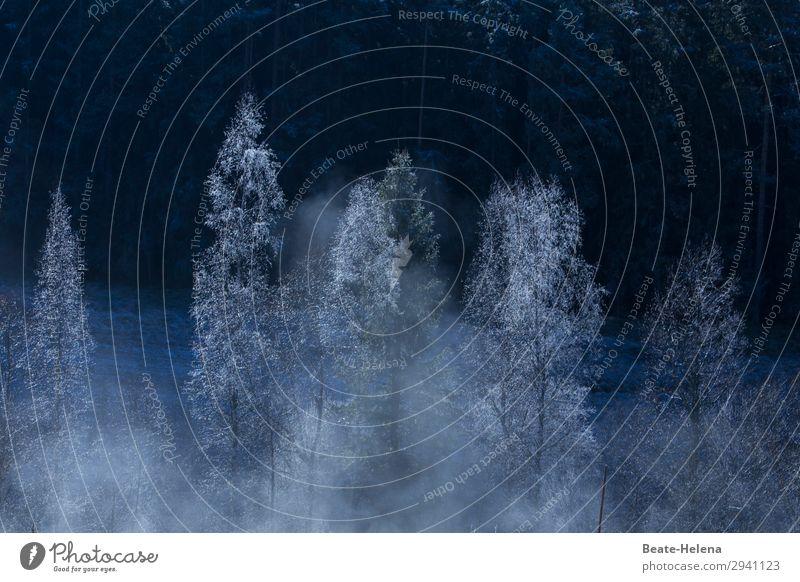 Besinnliche Festtage Natur Weihnachten & Advent schön Landschaft Baum Winter kalt Feste & Feiern außergewöhnlich Stimmung leuchten Eis Wetter glänzend elegant