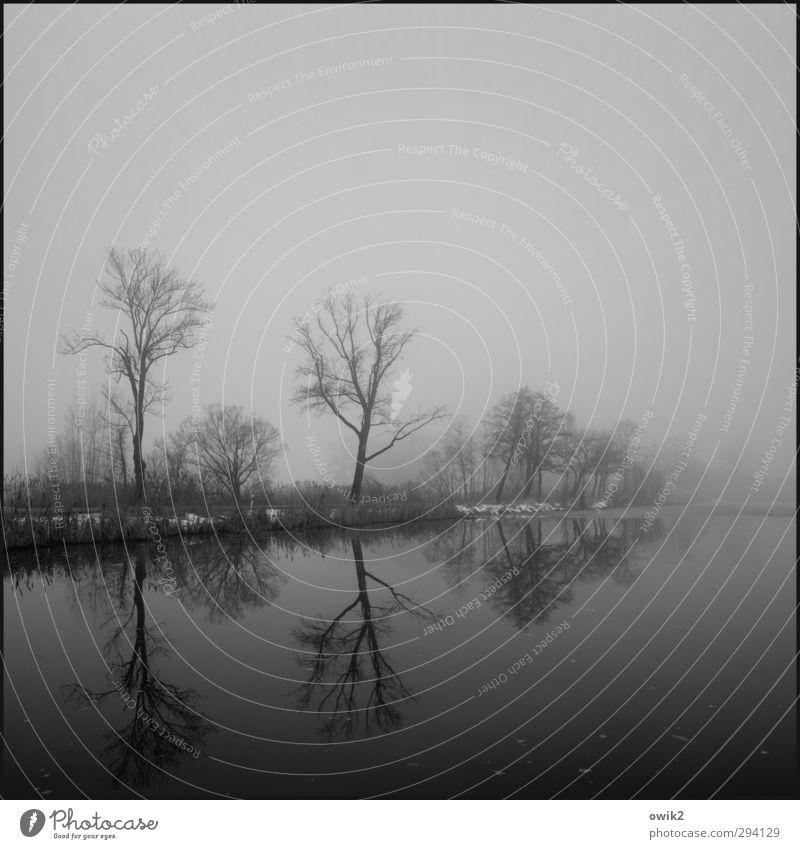Passionszeit Umwelt Natur Landschaft Pflanze Horizont Winter Schönes Wetter Nebel Baum Sträucher Seeufer dunkel trist Traurigkeit Trauer Einsamkeit Ewigkeit