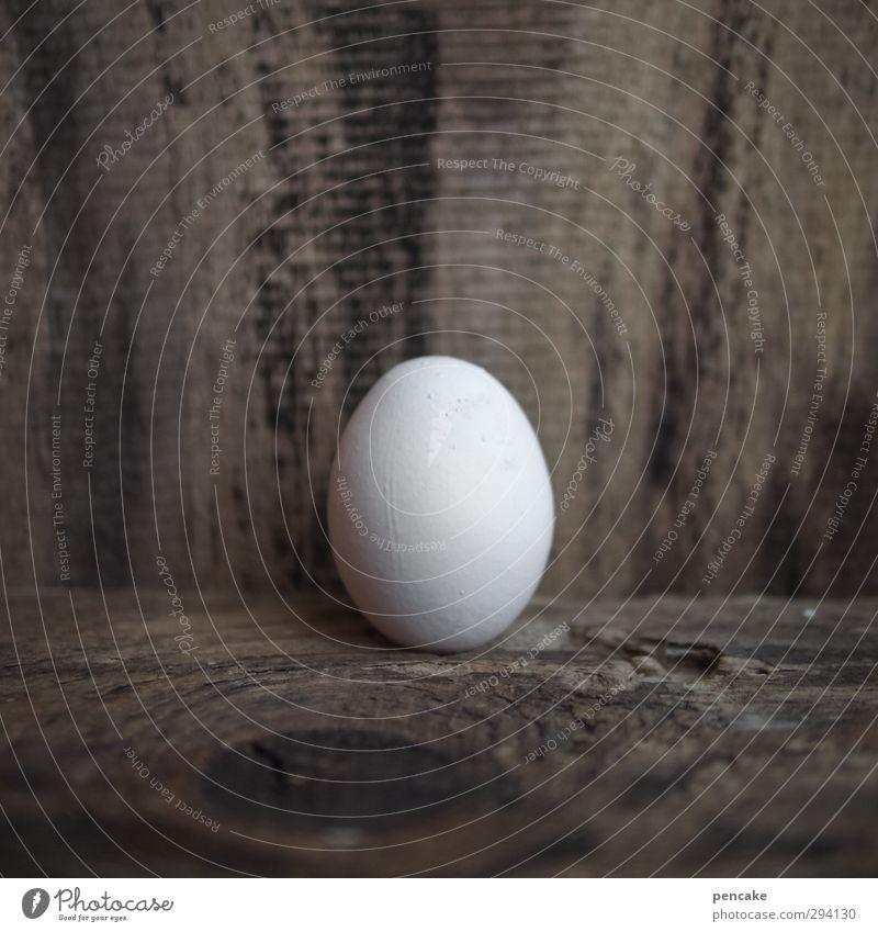 ei:malig Natur nackt weiß Tier Leben Holz Lebensmittel Erde Design Dekoration & Verzierung Beginn Zukunft Lebensfreude einzigartig Zeichen Urelemente