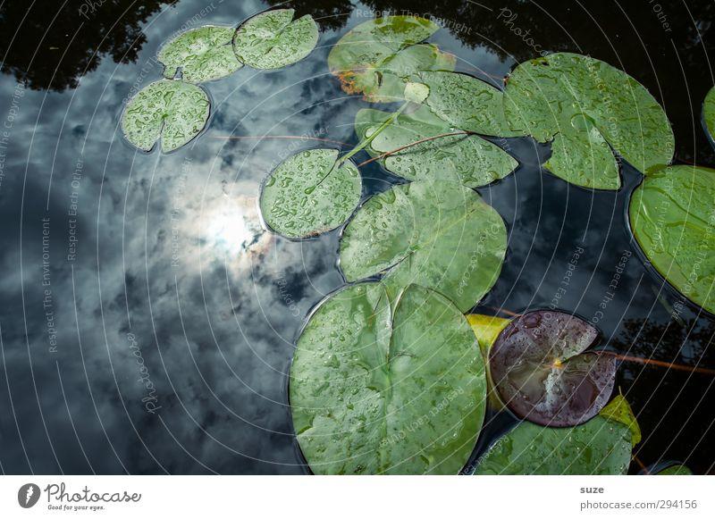 Sonnenbad Umwelt Natur Urelemente Wasser Himmel Wolken Pflanze Blatt Grünpflanze Teich See dunkel kalt schön blau grün Wasserpflanze Wasseroberfläche
