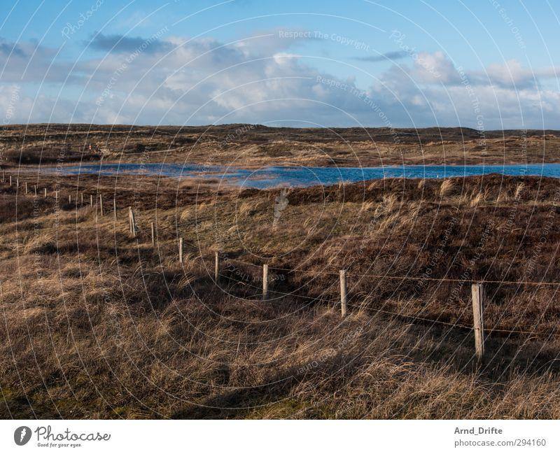 Nord-Holland Ferien & Urlaub & Reisen Tourismus Ausflug Strand Winter Natur Landschaft Pflanze Himmel Wolken Gras Sträucher Dünengras Küste blau braun