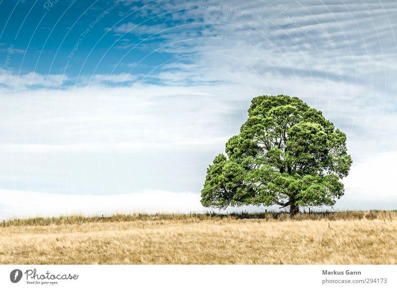 Baum auf der Wiese Ferien & Urlaub & Reisen Sommer Natur Landschaft Feld blau braun gelb grün ruhig Romantik Dürre trocken Wolken groß stark alt Einsamkeit