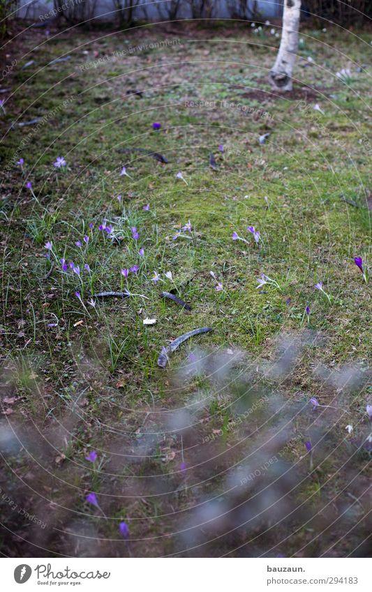 verstehe wer will. ich nicht. Natur Stadt Pflanze grün Baum Blume Wiese Gras Frühling Blüte Wege & Pfade Garten Park Wohnung Freizeit & Hobby Wachstum