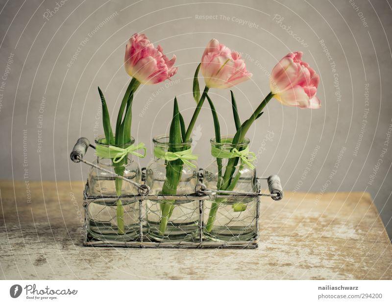 Stilleben mit Tulpen alt schön Pflanze Blume Wärme Frühling Holz Metall braun natürlich Stimmung rosa Ordnung leuchten Fröhlichkeit ästhetisch