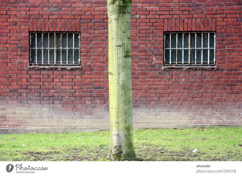 *800* B-| Baum Baumstamm Wiese Gebäude Justizvollzugsanstalt Mauer Wand Fassade Fenster Gitter Blick grün rot Farbfoto Außenaufnahme abstrakt Muster
