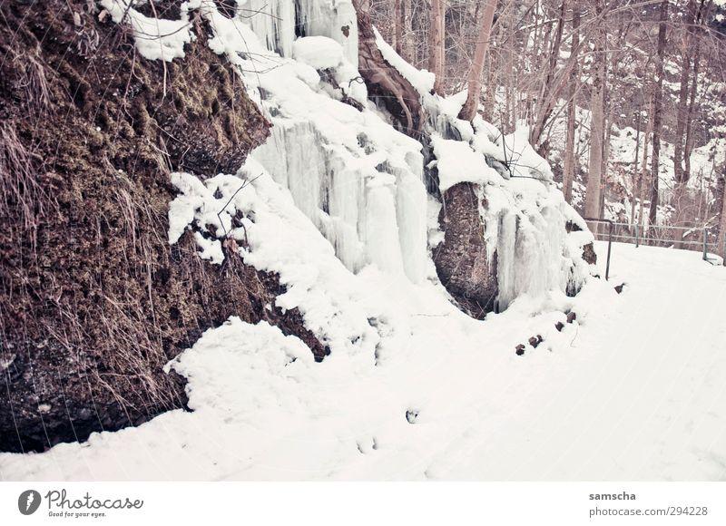Eiszeit Winter Schnee Winterurlaub Umwelt Natur Landschaft Frost frieren kalt natürlich Schneefall Schneelandschaft Schneedecke Eiszapfen gefroren