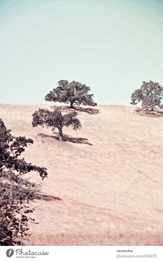 Freiheit Sommer wandern Umwelt Natur Landschaft Himmel Wiese Hügel heiß natürlich trocken Wärme Abenteuer Baum Kalifornien vertrocknet sommerlich Sommertag