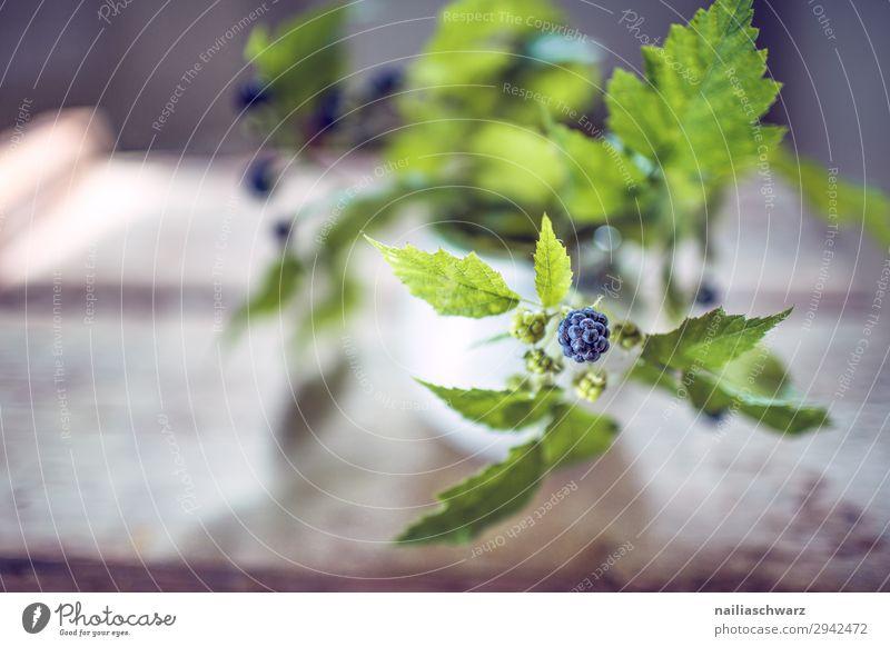 Brombeerzweig Frucht Ernährung Bioprodukte Vegetarische Ernährung Natur Pflanze Sommer Grünpflanze Nutzpflanze Brombeeren Zweig Zweige u. Äste Garten Duft