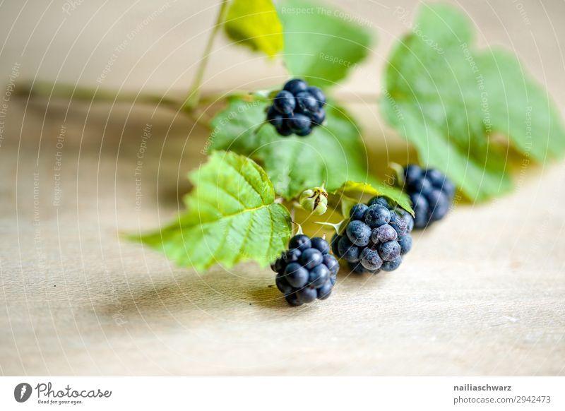 Brombeeren Lebensmittel Frucht Ernährung Bioprodukte Vegetarische Ernährung Umwelt Natur Sommer Pflanze Nutzpflanze Duft frisch Gesundheit natürlich blau grün