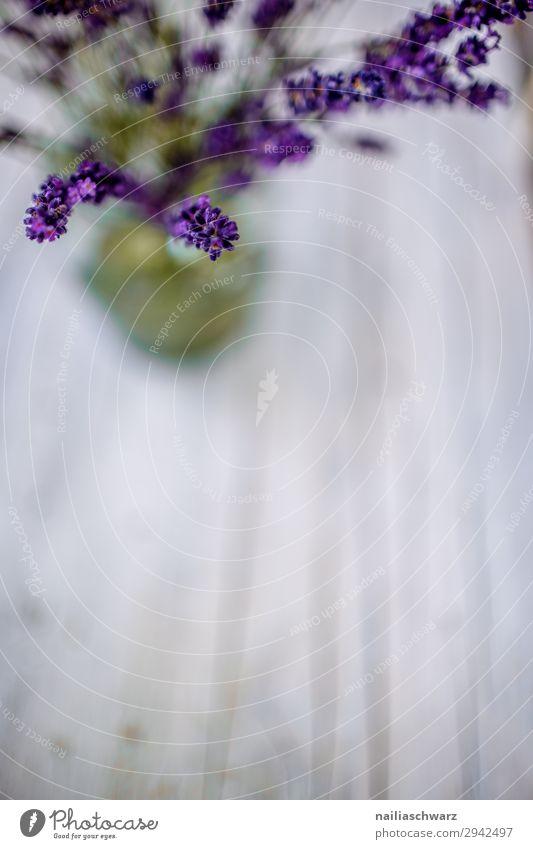 Lavender Stillleben Sommer Pflanze Blume Lavendel Vase Blumenstrauß Duft einfach natürlich schön grau grün violett Romantik friedlich Idylle rein Farbfoto