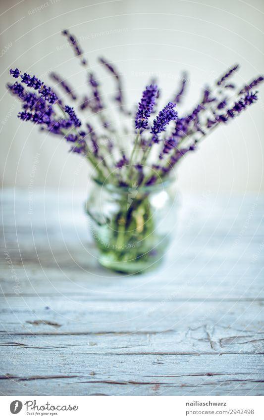 Stillleben mit Lavendel Lifestyle Pflanze Blume Grünpflanze Nutzpflanze Vase Glas Blumenstrauß Duft elegant natürlich schön grau grün violett Frühlingsgefühle