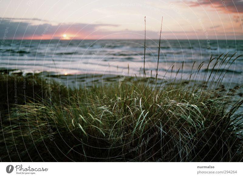 schöne Aussichten Natur Ferien & Urlaub & Reisen Wasser Sommer Pflanze Meer Tier Landschaft Strand Erholung Ferne Freiheit Küste Wellen Freizeit & Hobby