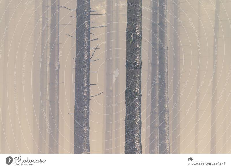 waldschwund Natur Winter Klima Klimawandel Wetter schlechtes Wetter Nebel Baum Nadelwald Tanne Fichtenwald Baumstamm Ast Wald bizarr Surrealismus Umwelt