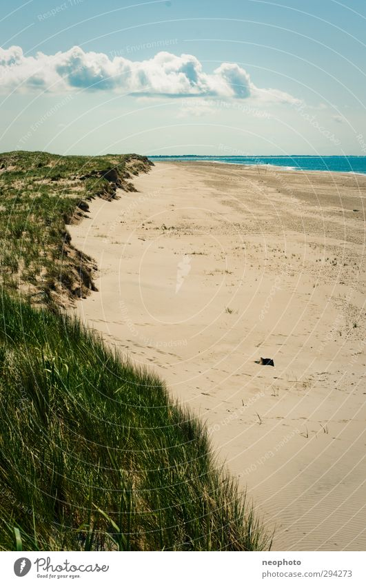 Strandwetter Landschaft Sand Luft Wasser Himmel Wolken Frühling Sommer Herbst Schönes Wetter Gras Küste Nordsee Düne blau gold grün Einsamkeit Menschenleer