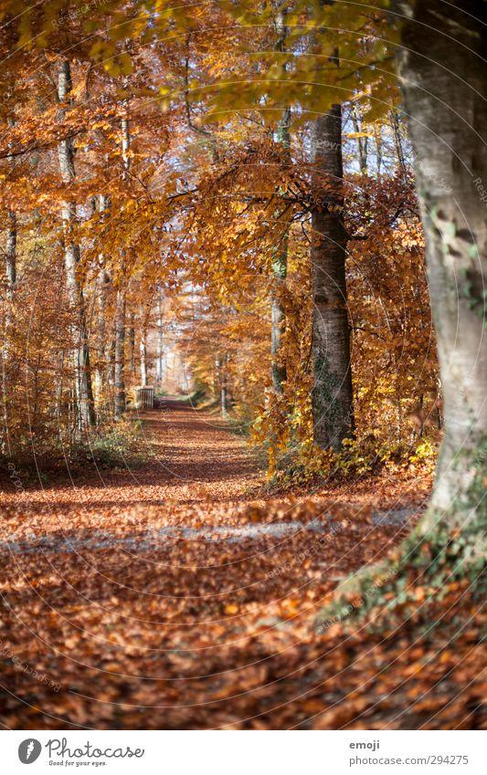 Schnee: weg Natur Baum Blatt Wald Umwelt Herbst natürlich orange Schönes Wetter Laubbaum Laubwald