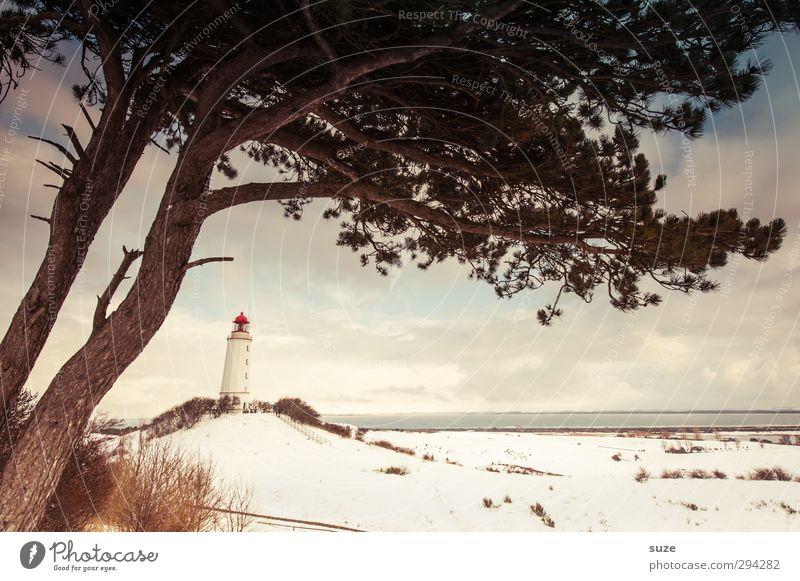 Strandwächter Meer Insel Winter Schnee Umwelt Natur Landschaft Urelemente Erde Himmel Wolken Horizont Klima Wetter Schönes Wetter Baum Hügel Küste Leuchtturm