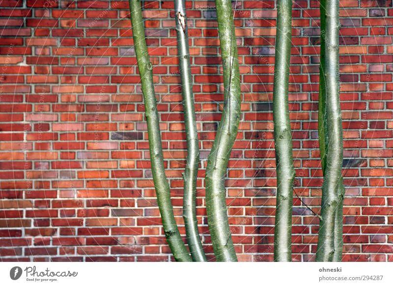 Fünf Freunde Baumstamm Bauwerk Gebäude Mauer Wand Fassade Stein Backstein grün rot Schutz Kraft Umwelt Stadt Wachstum Zusammenhalt Kontrast Farbfoto mehrfarbig