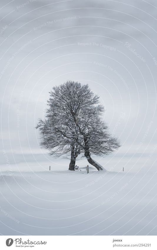 Stütze Natur Himmel Wolken Horizont Winter schlechtes Wetter Eis Frost Schnee Baum Hügel Berge u. Gebirge Schauinsland dunkel kalt grau schwarz ästhetisch Kraft