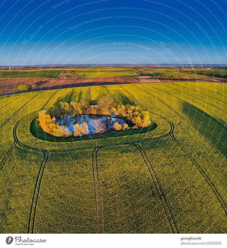 Frühluft II Himmel Ferien & Urlaub & Reisen Natur Pflanze blau Landschaft gelb Umwelt Frühling Tourismus Ausflug frei Feld Erde Wachstum Blühend
