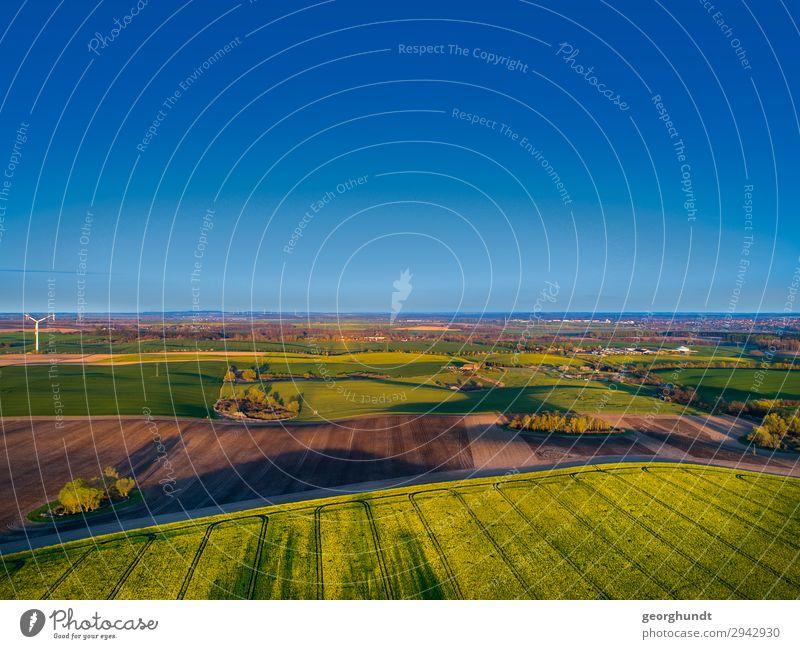 Frühluft I Himmel Natur Pflanze blau Landschaft Leben Umwelt Frühling Sand frei Feld Erde Blühend Wellness Landwirtschaft Wolkenloser Himmel