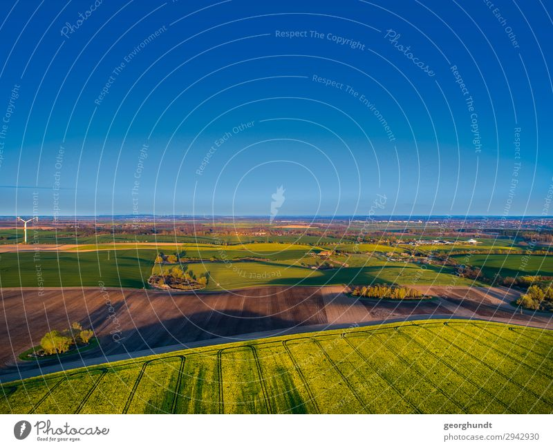 Frühluft I Wellness Leben Landwirtschaft Forstwirtschaft Umwelt Natur Landschaft Pflanze Erde Sand Himmel Wolkenloser Himmel Feld Menschenleer Blühend frei blau